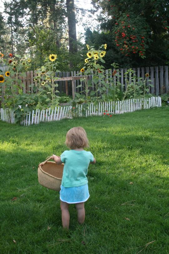 Garden aug 28 1