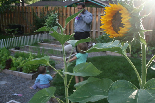 Garden aug 28 3