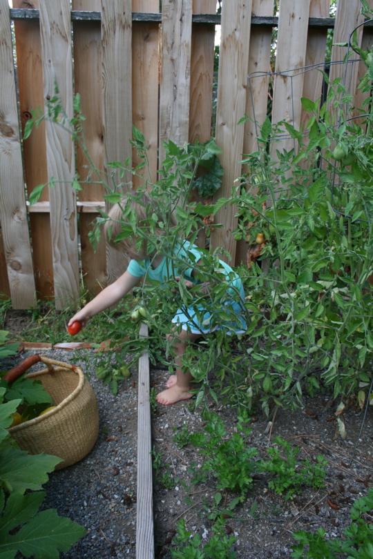 Garden aug 28 2