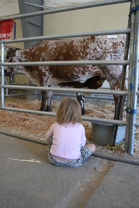 Nursing cow