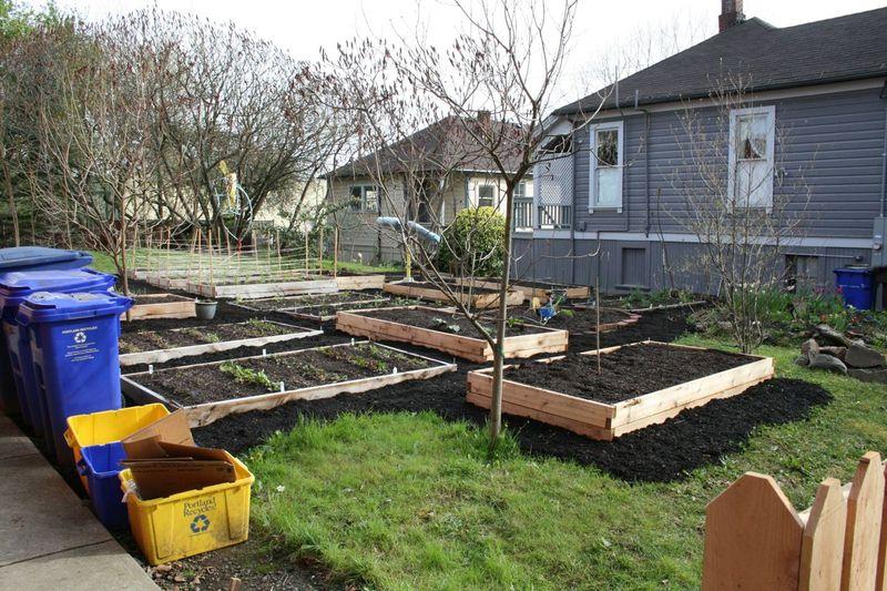 Portland veggie garden