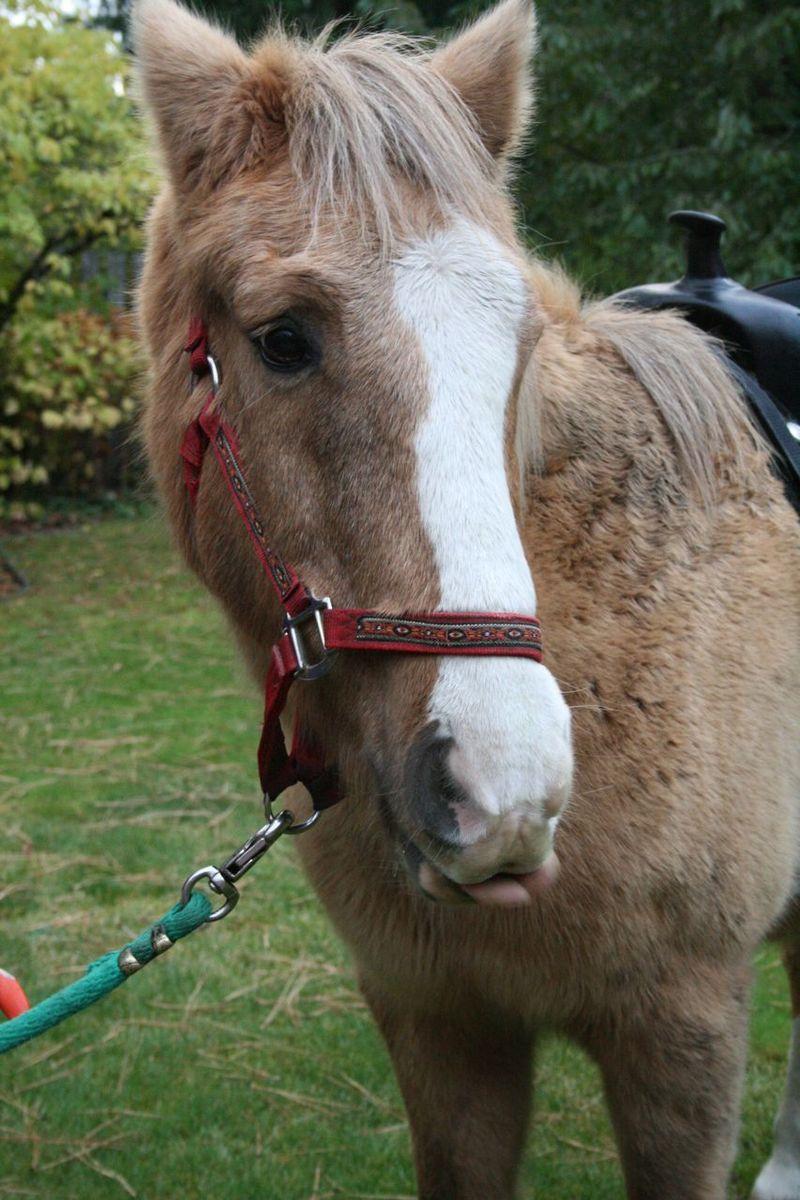 Pc horse party pony