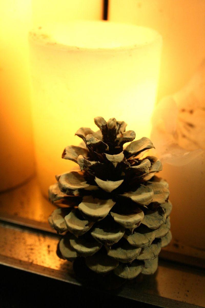 Snowy pinecones