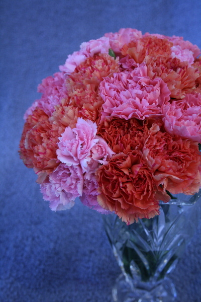 Flowers_carnations