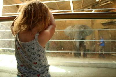 Zoo_eleph_bath