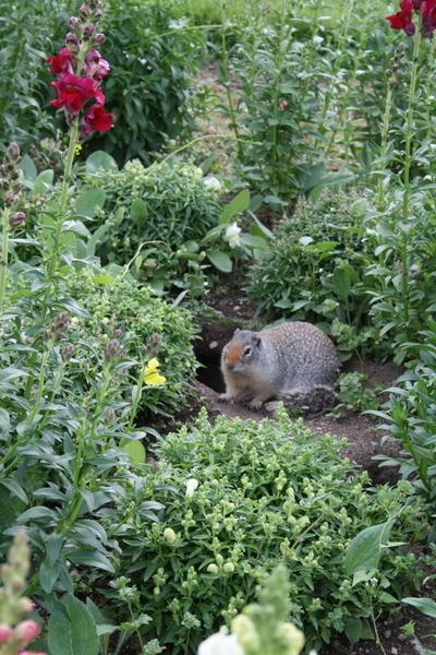 Finch_marmot
