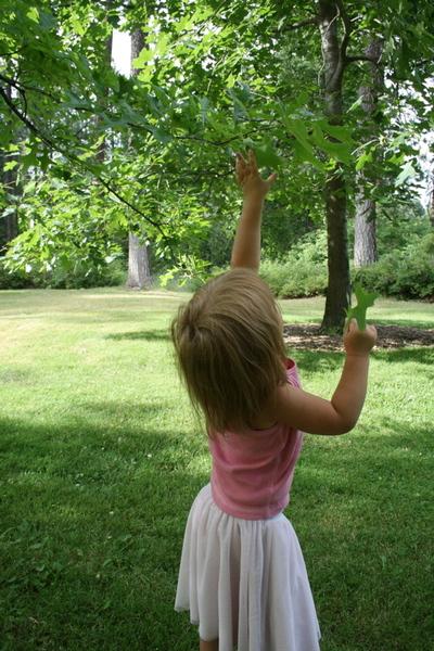 Finch_reach_tree