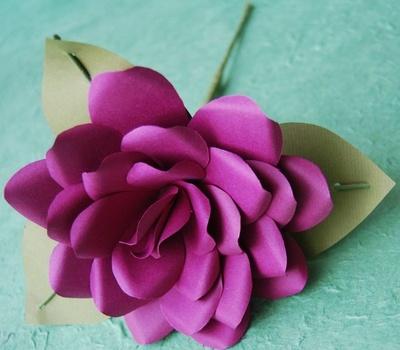 Anemone_rose